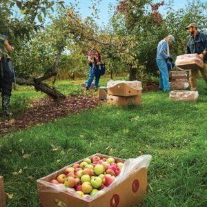 gleaning vt foodbank